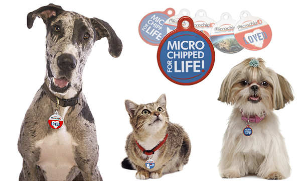 Custom Collar Tags for Your Pet!