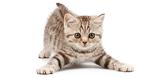 Kitty-Flip
