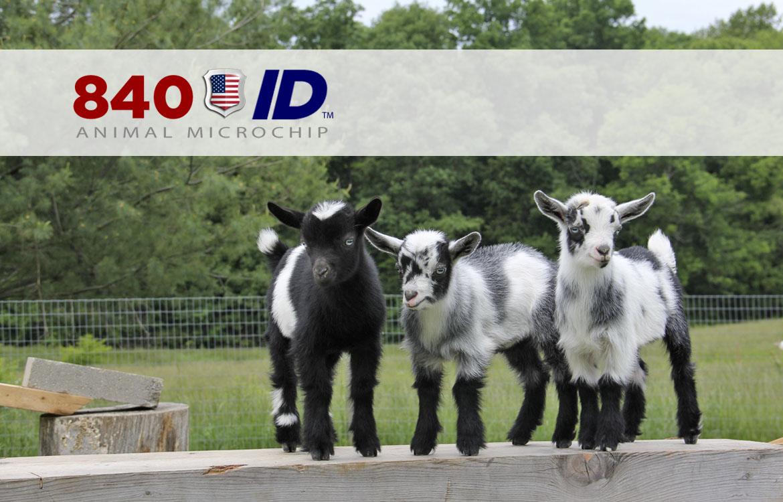 USDA 840 ID approved minichip