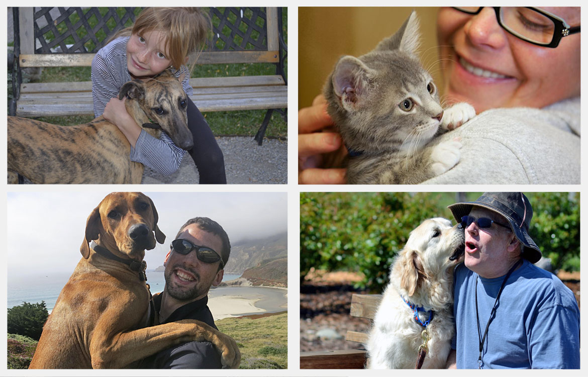 Registered microchips bring pets home