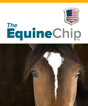 Equine Cover