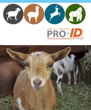 ProID-icon